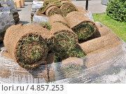 Купить «Рулонный газон (дерн) на поддонах», эксклюзивное фото № 4857253, снято 30 июня 2013 г. (c) Алёшина Оксана / Фотобанк Лори
