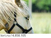 Голова белой лошади. Стоковое фото, фотограф Анастасия Марисенкова / Фотобанк Лори