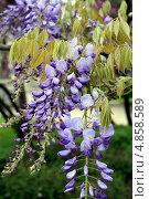 Купить «Цветы в саду в Париже, Франция», фото № 4858589, снято 7 мая 2013 г. (c) Ирина Иванова / Фотобанк Лори