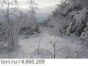 Заснеженные деревья. Стоковое фото, фотограф Барабанов Максим / Фотобанк Лори