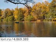 Золотая осень. Стоковое фото, фотограф Оксана Мади / Фотобанк Лори