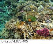 Купить «Рыба зеленого цвета», фото № 4875405, снято 13 июня 2013 г. (c) Робул Дмитрий / Фотобанк Лори