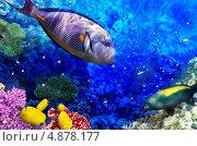 Купить «Рыбы и кораллы в Красном море. Египет», фото № 4878177, снято 7 апреля 2020 г. (c) Vitas / Фотобанк Лори