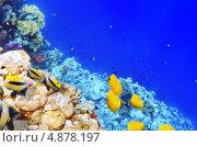 Купить «Кораллы и разноцветные рыбы в Красном море. Египет, Африка», фото № 4878197, снято 8 сентября 2012 г. (c) Vitas / Фотобанк Лори