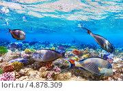 Купить «Кораллы и рыбы в Красном море. Египет, Африка», фото № 4878309, снято 3 сентября 2012 г. (c) Vitas / Фотобанк Лори