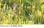Купить «Колыхание травы в поле», видеоролик № 4885933, снято 24 июня 2013 г. (c) Юрий Александрович Балдин / Фотобанк Лори
