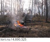 Пожар в лесу. Стоковое фото, фотограф Геннадий чупругин / Фотобанк Лори