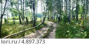 Березовый лес. Стоковое фото, фотограф Анастасия Кунденкова / Фотобанк Лори