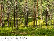 Купить «Северный лес», фото № 4907517, снято 2 июля 2013 г. (c) Валерия Попова / Фотобанк Лори