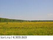 Русское поле (2013 год). Стоковое фото, фотограф Богатырева Яна Сергеевна / Фотобанк Лори
