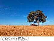 Одинокое дерево на пшеничном поле, на фоне синего неба. Стоковое фото, фотограф Discovod / Фотобанк Лори