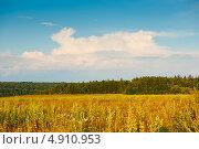 Купить «Лес и поле ранним вечером. Подмосковье», фото № 4910953, снято 26 июля 2013 г. (c) E. O. / Фотобанк Лори