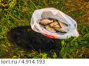Рыба. Стоковое фото, фотограф Кухаренко Ефим / Фотобанк Лори