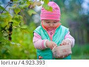 Купить «Маленькая девочка собирает ягоды черной смородины», фото № 4923393, снято 24 июля 2013 г. (c) Julia Shepeleva / Фотобанк Лори