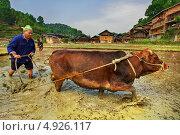 Китайский фермер вспахивает рисовое поле с помощью буйвола (2010 год). Редакционное фото, фотограф Владимир Григорьев / Фотобанк Лори