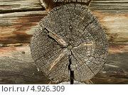 Годовые кольца на срезе бревна (2013 год). Стоковое фото, фотограф Наталия Жолобова / Фотобанк Лори