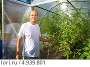 Мужчина стоит возле теплицы с помидорами. Стоковое фото, фотограф Елена Коромыслова / Фотобанк Лори