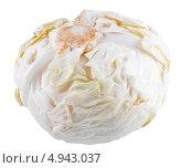 Купить «Один кочан капусты на белом фоне», фото № 4943037, снято 9 июня 2013 г. (c) Литвяк Игорь / Фотобанк Лори