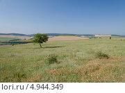 Степной летний пейзаж. Стоковое фото, фотограф Искрен Петров / Фотобанк Лори