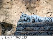 Купить «Белый тигр. Московский зоопарк», фото № 4963333, снято 15 августа 2018 г. (c) Боев Дмитрий / Фотобанк Лори