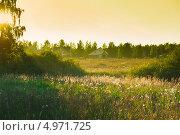 Купить «Подмосковный пейзаж вечером (контровый свет)», фото № 4971725, снято 17 августа 2013 г. (c) E. O. / Фотобанк Лори
