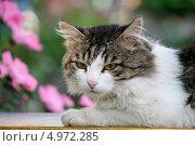 Купить «Портрет кота», фото № 4972285, снято 20 июля 2013 г. (c) Хайрятдинов Ринат / Фотобанк Лори
