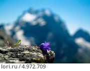 Горный цветок. Стоковое фото, фотограф Вячеслав Андреев / Фотобанк Лори