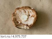 Внутренняя сторона шляпки желчного гриба. Стоковое фото, фотограф Анна Романова / Фотобанк Лори