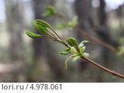Купить «Весенний побег», фото № 4978061, снято 14 мая 2013 г. (c) Елена Арсентьева / Фотобанк Лори