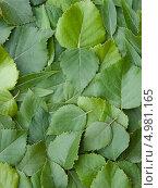 Разбросанные листья. Стоковое фото, фотограф Бровина Екатерина / Фотобанк Лори