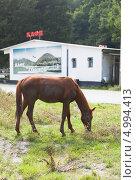 Купить «Лошадь, пасущаяся у дороги на фоне кафе», фото № 4994413, снято 9 июля 2013 г. (c) Николай Мухорин / Фотобанк Лори