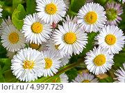 Белый цветы. Стоковое фото, фотограф Нина Трубицына / Фотобанк Лори