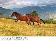 Лошади бегут по траве. Стоковое фото, фотограф Эдуард Кислинский / Фотобанк Лори