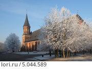 Купить «Калининград. Кафедральный собор. Зимний день», эксклюзивное фото № 5044589, снято 22 декабря 2011 г. (c) Svet / Фотобанк Лори