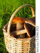 Купить «Грибы в плетеной корзине на траве», фото № 5044953, снято 11 октября 2012 г. (c) ElenArt / Фотобанк Лори