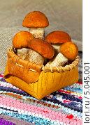 Купить «Грибы подосиновики в плетеном лукошке из бересты», фото № 5045001, снято 9 октября 2012 г. (c) ElenArt / Фотобанк Лори