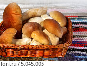 Купить «Грибы боровики в плетеной корзинке», фото № 5045005, снято 9 октября 2012 г. (c) ElenArt / Фотобанк Лори