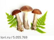Купить «Три подберезовика и листья папоротника», эксклюзивное фото № 5055769, снято 13 сентября 2013 г. (c) Яна Королёва / Фотобанк Лори