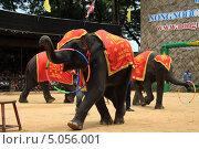 Дрессированные слоны (2011 год). Редакционное фото, фотограф Алексей Леонтьев / Фотобанк Лори