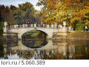 Купить «Золотая осень», фото № 5060389, снято 9 октября 2010 г. (c) Тавруева Надежда / Фотобанк Лори
