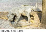 Купить «Москва, памятник писающей собаке, Садовая-Черногрязская улица», фото № 5061193, снято 18 августа 2013 г. (c) ИВА Афонская / Фотобанк Лори