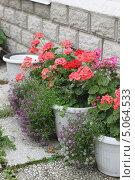 Купить «Садовая герань в горшках», фото № 5064533, снято 17 сентября 2013 г. (c) Мария Николаева / Фотобанк Лори