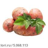 Купить «Клубни и листья картофеля на белом фоне», фото № 5068113, снято 28 июля 2013 г. (c) Валентина Разумова / Фотобанк Лори