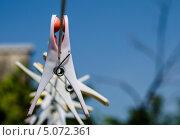 Прищепки на бельевой веревке. Стоковое фото, фотограф Анастасия Марисенкова / Фотобанк Лори