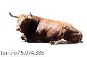 Купить «Коричневый бык», фото № 5074385, снято 5 июля 2013 г. (c) Яков Филимонов / Фотобанк Лори