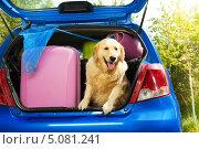 Купить «Открытый багажник машины, в котором стоят чемоданы, сумки, сачок и сидит собака», фото № 5081241, снято 3 августа 2013 г. (c) Сергей Новиков / Фотобанк Лори