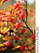 Осень. Стоковое фото, фотограф Дмитрий Арсеньев / Фотобанк Лори