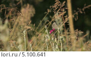 Купить «Бабочка в зарослях», видеоролик № 5100641, снято 24 июня 2013 г. (c) Юрий Александрович Балдин / Фотобанк Лори