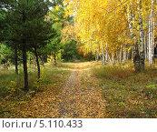 Золотая осень. Тропинка в смешанном лесу. Пейзаж. Стоковое фото, фотограф Светлана Ильева (Иванова) / Фотобанк Лори