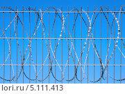Колючая проволока на фоне голубого неба. Стоковое фото, фотограф Наталья Алексахина / Фотобанк Лори